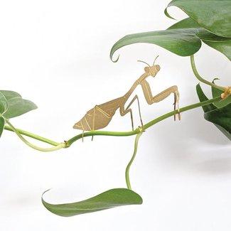 Another Studio Plant Animal Praying Mantis