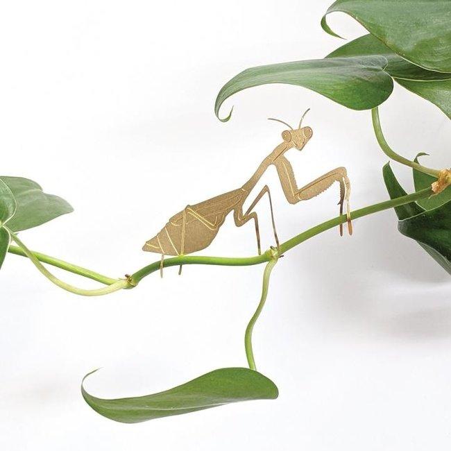Another Studio Pflanze Tier Gottesanbeterin