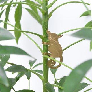Another Studio Animal Plante Galago