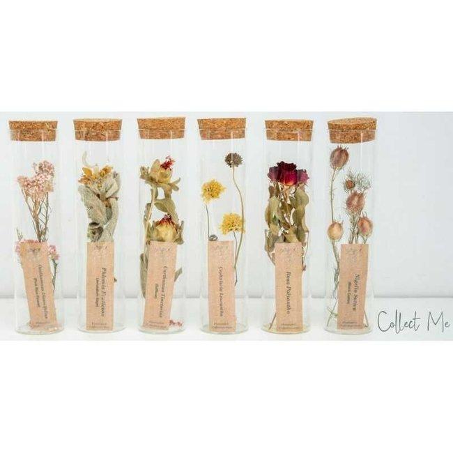 Plantophile Getrocknete Blumen in Vase