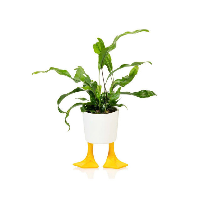 Bitten - Pot de Plante Pattes de Canard - small - porcelaine