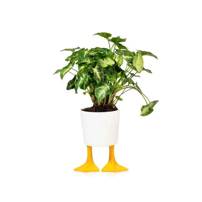 Bitten - Blumentopf Entenbeine  - Porzellan - large