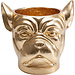 Karé Design Blumentopf - Übertopf Bulldogge - gold