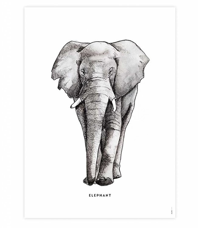 Bintje Poster - Olifant