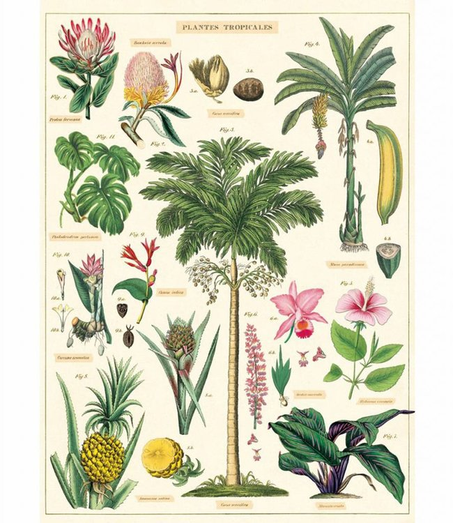 Cavallini & Co Poster - Tropische planten