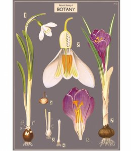 Cavallini & Co Poster - Crocus