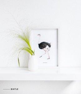 Bintje Poster A4 - Struisvogel