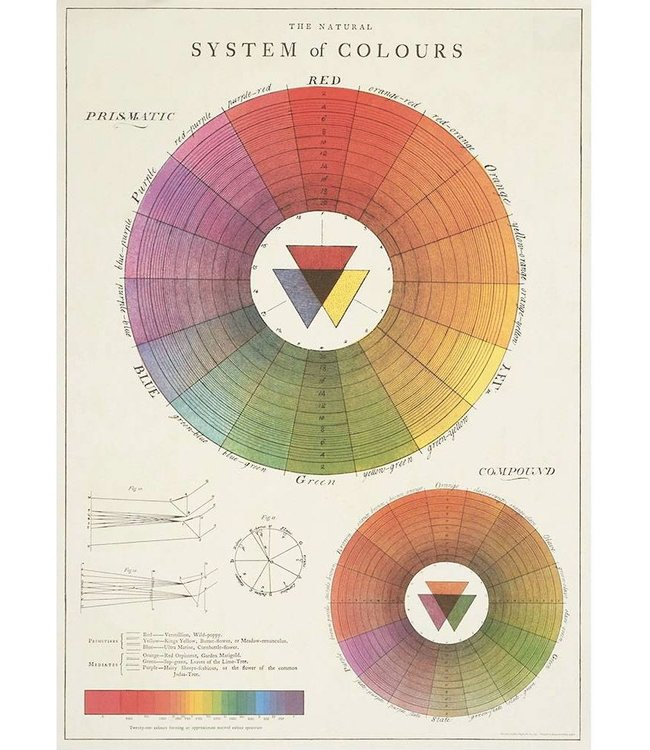 Cavallini & Co Poster Color Wheel
