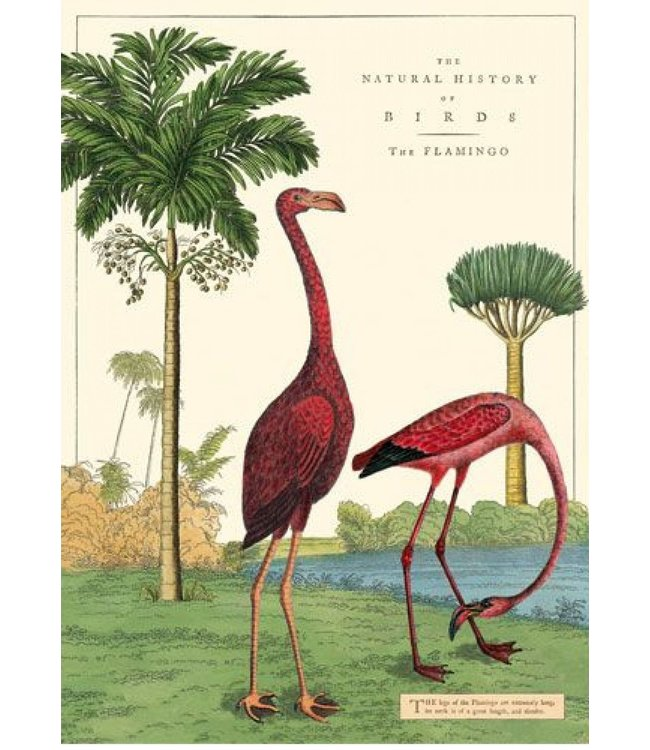 Cavallini & Co Poster Flamingo