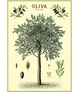 Cavallini & Co Poster Olijfboom