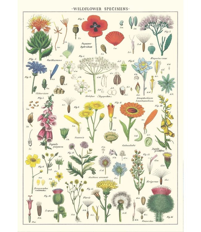 Cavallini & Co Poster - Wildflowers