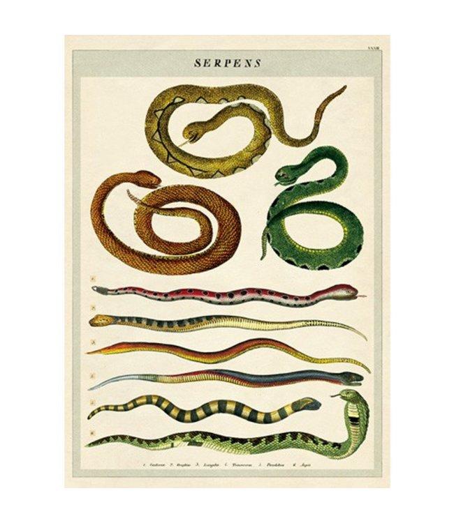 Cavallini & Co Poster/cadeaupapier - Slangen