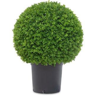 Fleur ami BUCHSBAUM Kunstpflanze, 80 cm