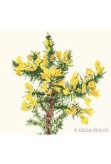 6 Pack of Greeting Cards- Irish Wildflowers