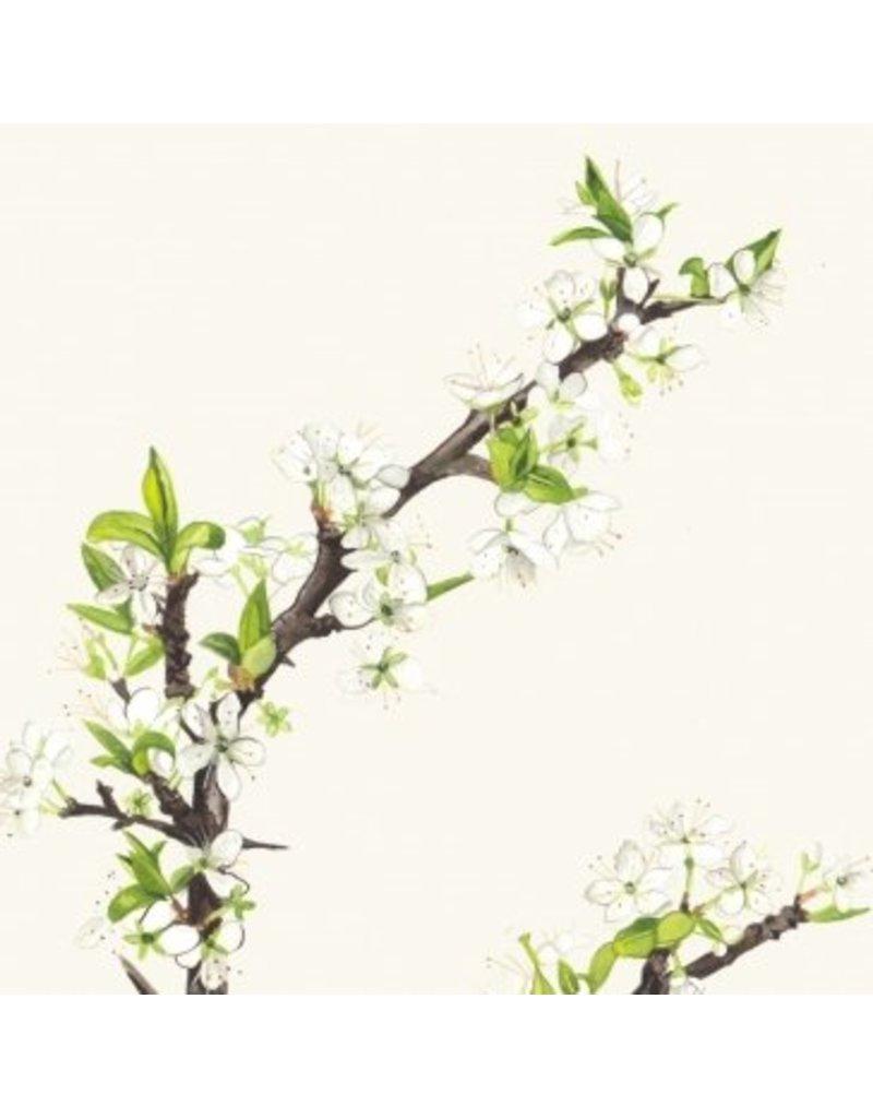 Kilcoe Studios 6 pack of greeting cards- Irish Trees