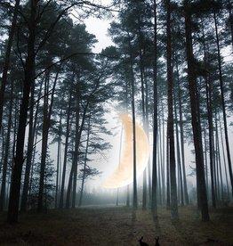 Moon Woods A3 print