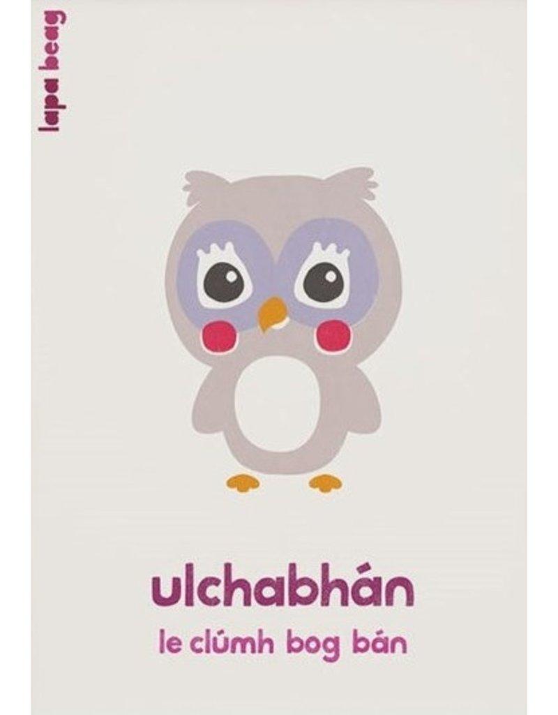 Lapa Beag Ulchabhán - Owl A3 Print