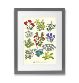 Clover Rua Irish Wildflower A4 Print