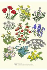 Clover Rua Irish Wildflower  A4 Print