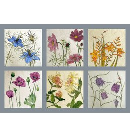 Annabel Langrish Set Of Irish Wild Flowers Illustrated Mini Cards - 12 Pack