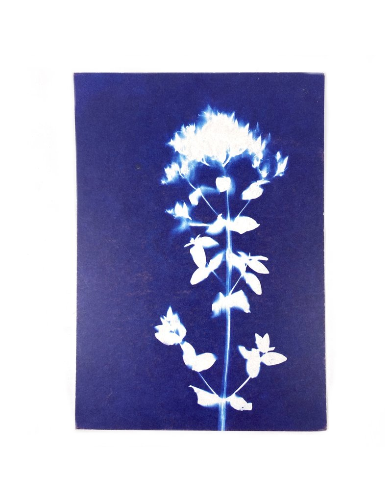 Maggie Marley Cyanotype Botanical  Set of 6 Greeting Cards
