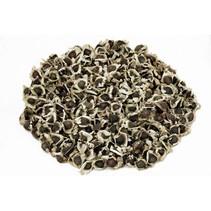 Moringa Samen ungeschält 50g