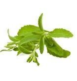 Steviahouse Stevia frø i lommen - cirka 20 stykker