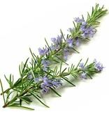 Aromed Organisk Rosemary Essential Oil 10ml