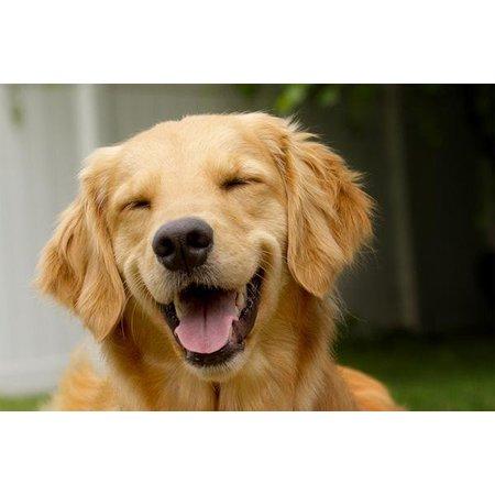 Aromed Hond darmen 50 ml