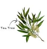 Aromed tea tree essentiële olie - 10ml