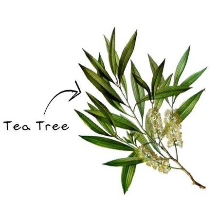 Aromed tea tree æterisk olie - 10 ml