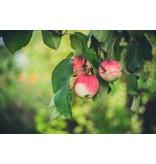 Nutrikraft Økologisk æble terninger - 100 g