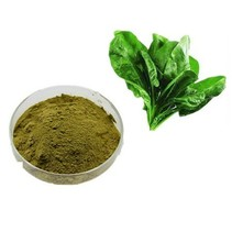 Organisk Spinach Powder