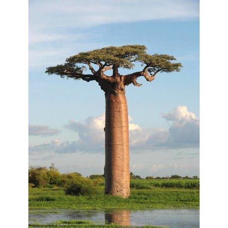Nutrikraft Bio Baobab Pulver