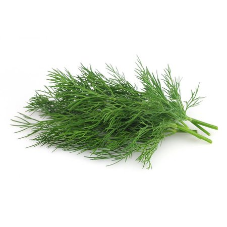 HolyFlavours Bio Dill Pulver
