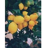 Nutrikraft Bio-Zitronenschale gemahlen