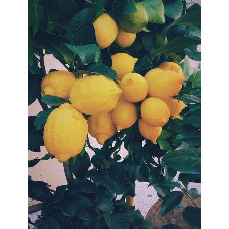 Nutrikraft Biologische citroenschillen gemalen
