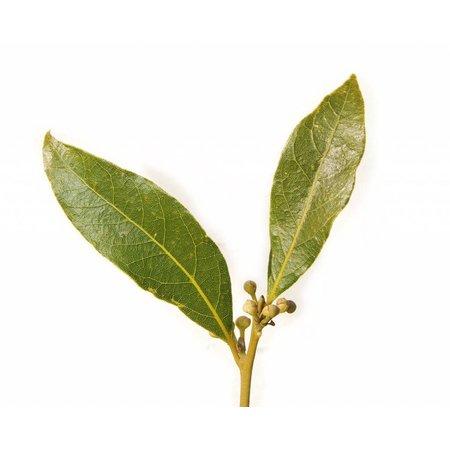 Nutrikraft Laurbærblade Biologisk