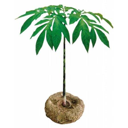 Nutrikraft Konjac spons bamboo zwart halfrond