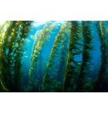 Nutrikraft Kelp Pulver 100gr