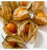 Nutrikraft Goudbessen- Inca bær bio - 100 g