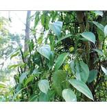 Nutrikraft Biologische Tijger Peper 80 gr
