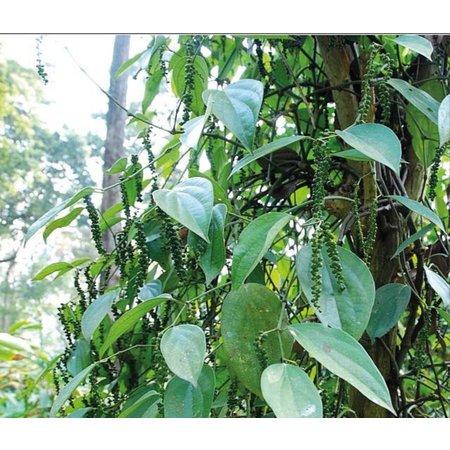 Nutrikraft Bio Tiger-Pfeffer Bio 100g