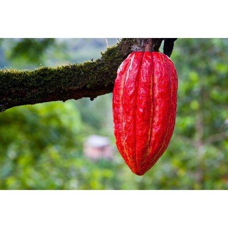 Nutrikraft Cacao Nibs Raw BIO