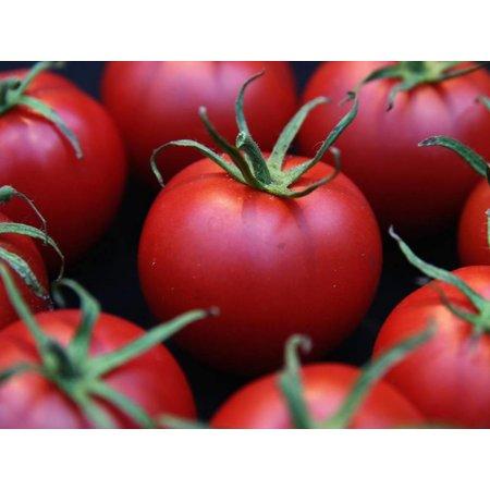 HolyFlavours Biologische Tomatenpoeder