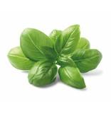 HolyFlavours Basil urter på organisk vis