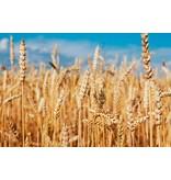 Mamado tarwekiem olie pure wheat germ oil - 150ml