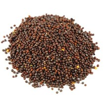 Organic Sarepta brown Mustard seeds whole Brassica juncea