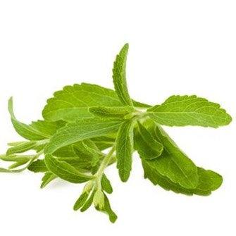 Stevia tea without sugar