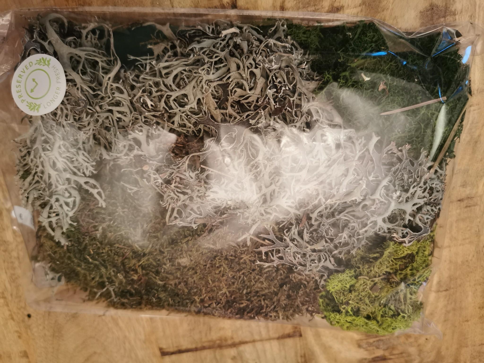 Moos - gepresst 4 Sorten